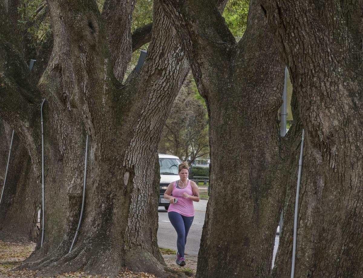 League City Historic Trees