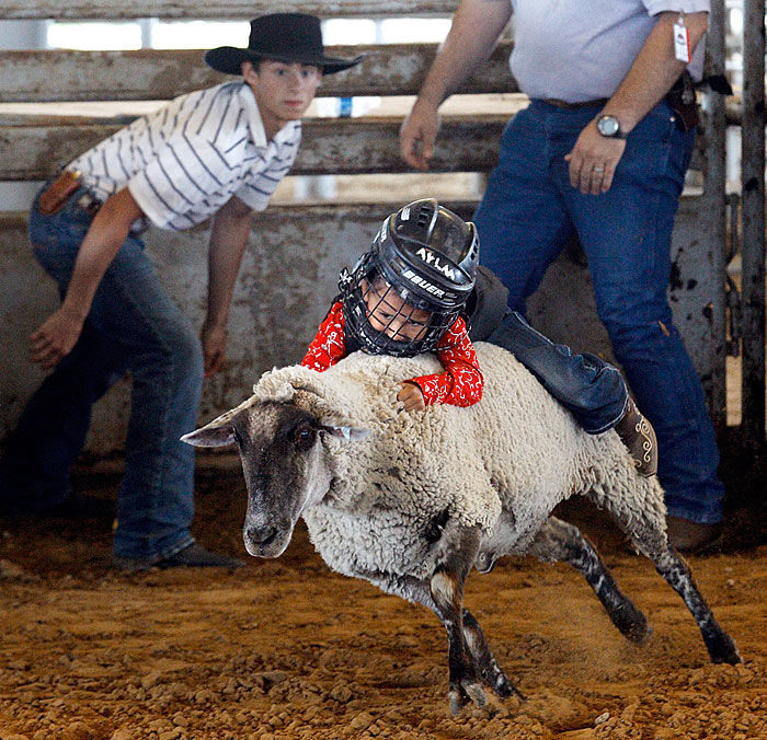 Girl holds on tight in Mutton Bustin' competition
