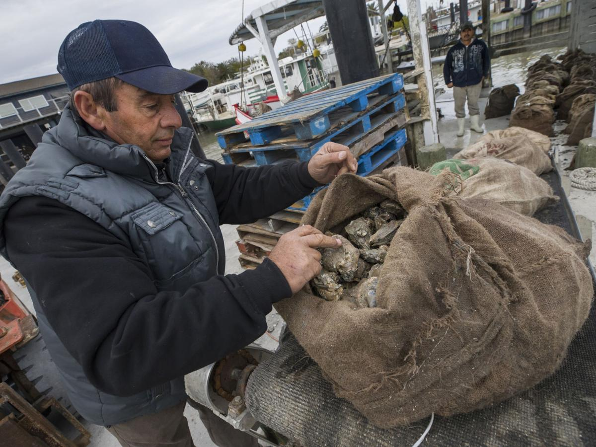 Harvey dampened oyster season, but less than feared