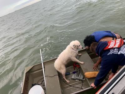 Coast Guard retrieves man, dog from Galveston Bay