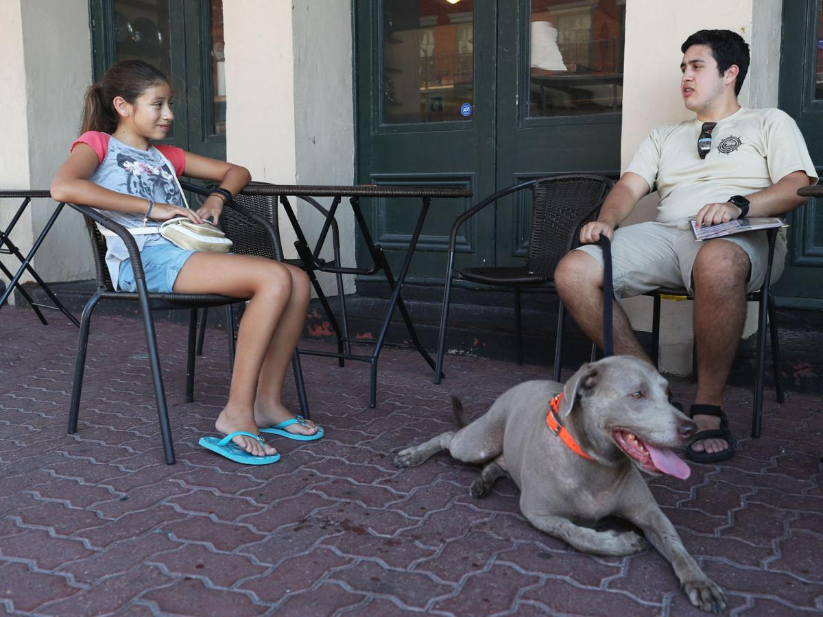 Downtown dealing with dog waste issues