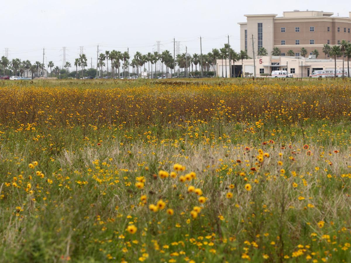 Lowe's Galveston land goes up for auction, historic downtown building goes on the market