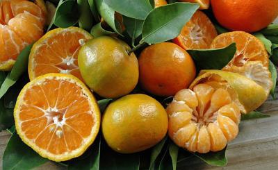 Oranges and protecting citrus