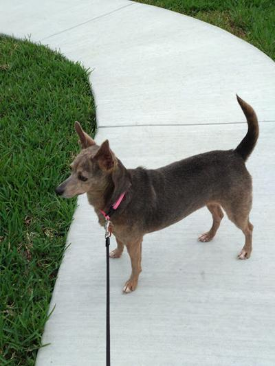 Bacliff dog's death highlights gap in Texas laws | News