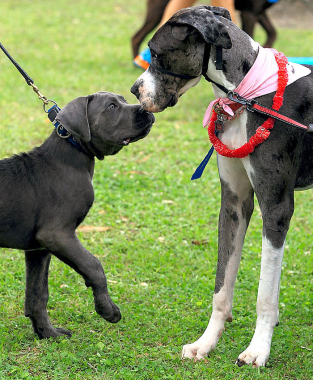 Bark in the Park has food and fun for animals and owners