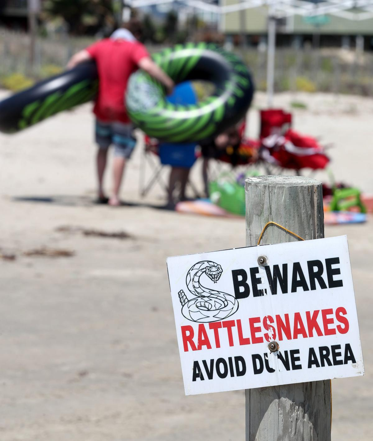 Rattlesnake precautions, treatments