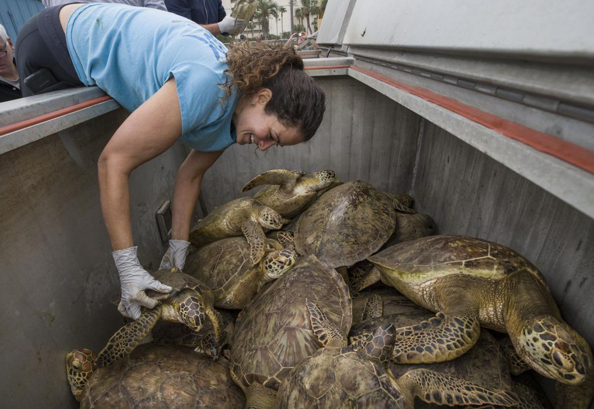 Fish killed, turtles stunned by week\'s icy weather   News   The ...
