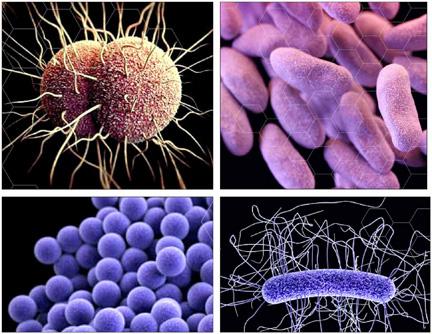 Antibiotic resistant
