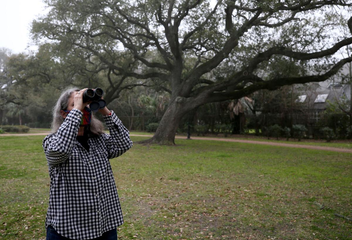Galveston gets Bird City Texas designation