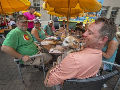 Dogs on Restaurant Patios