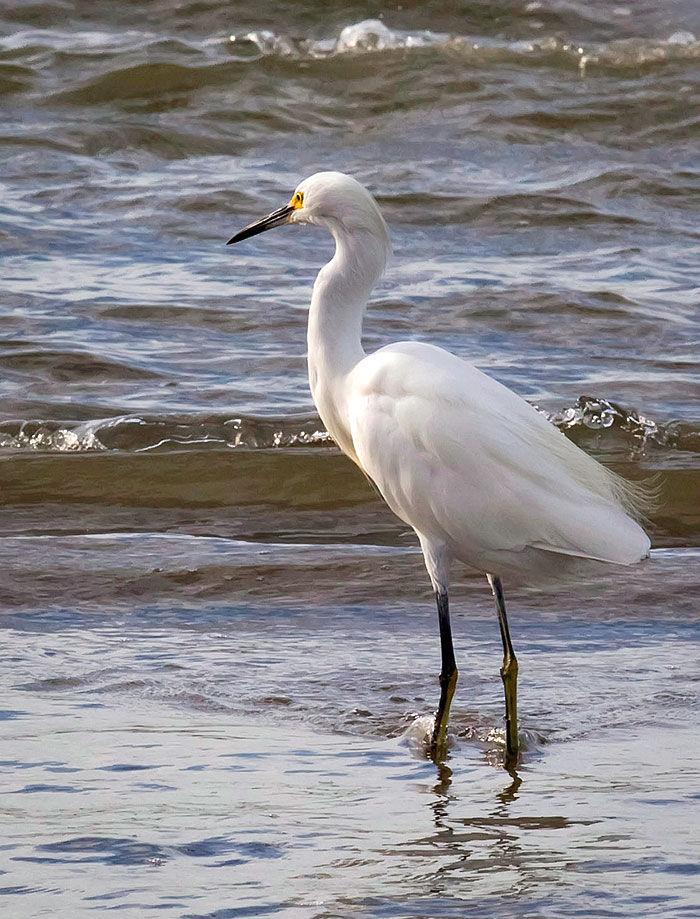 Tides 101: Learning the basics of coastal tides | Lifestyle