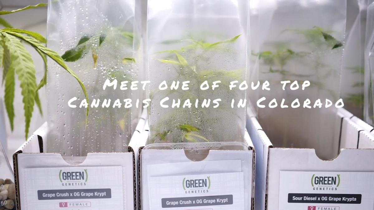 WATCH: Brothers lead cannabis industry in Colorado