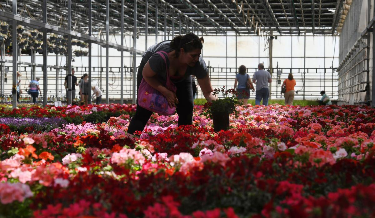 Colorado Springs' hidden flower haven with a deep family history