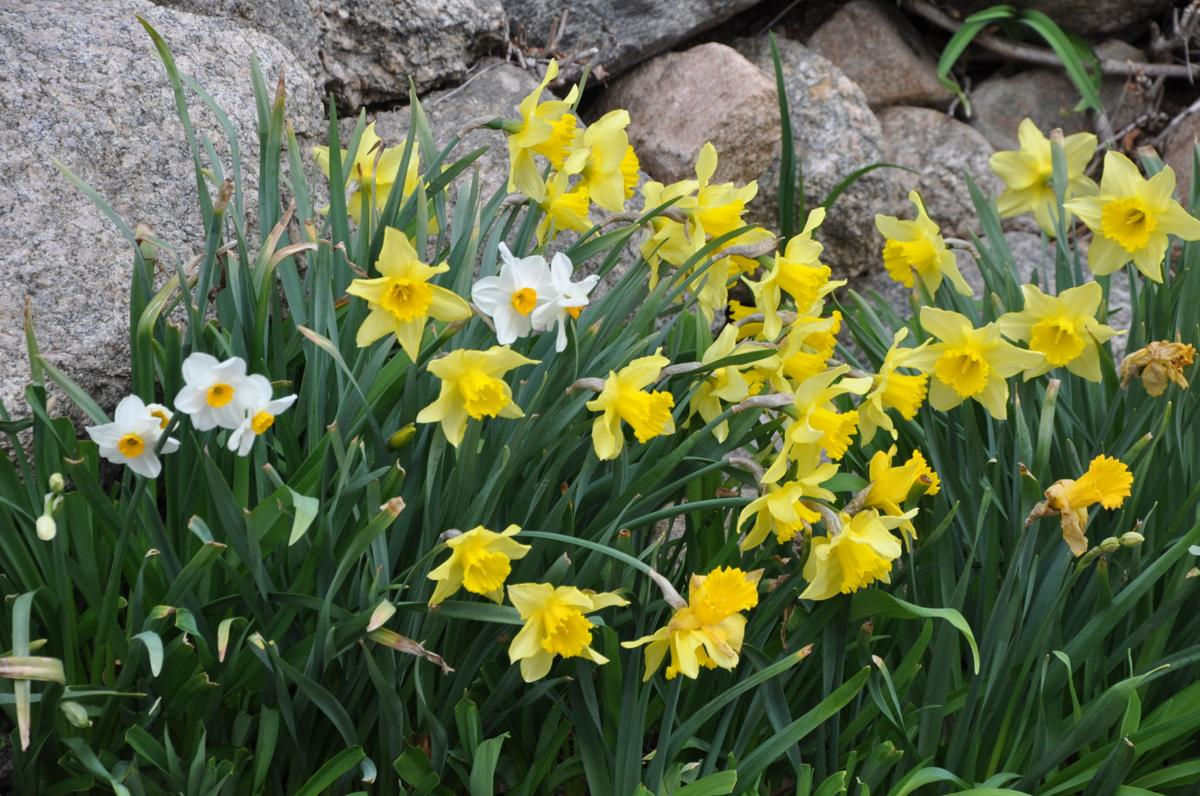 Year Round Gardening Planting Bulbs In The Fall For Early Spring