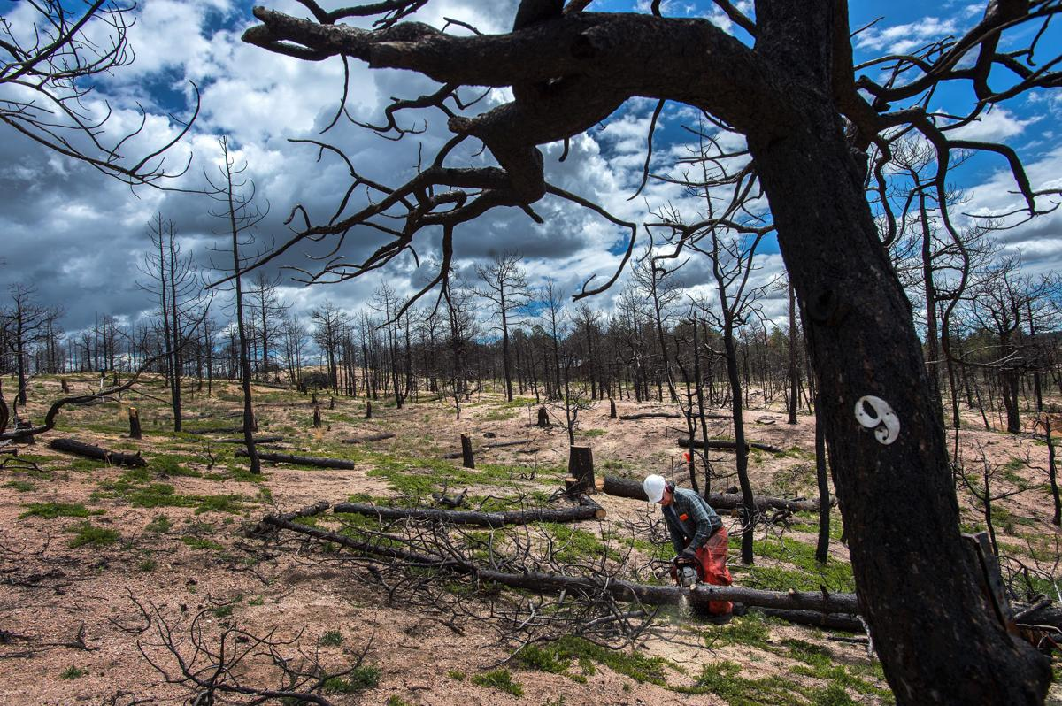 Two destructive wildfires in El Paso County on unique recovery paths Two places Two recoveries Looking forward