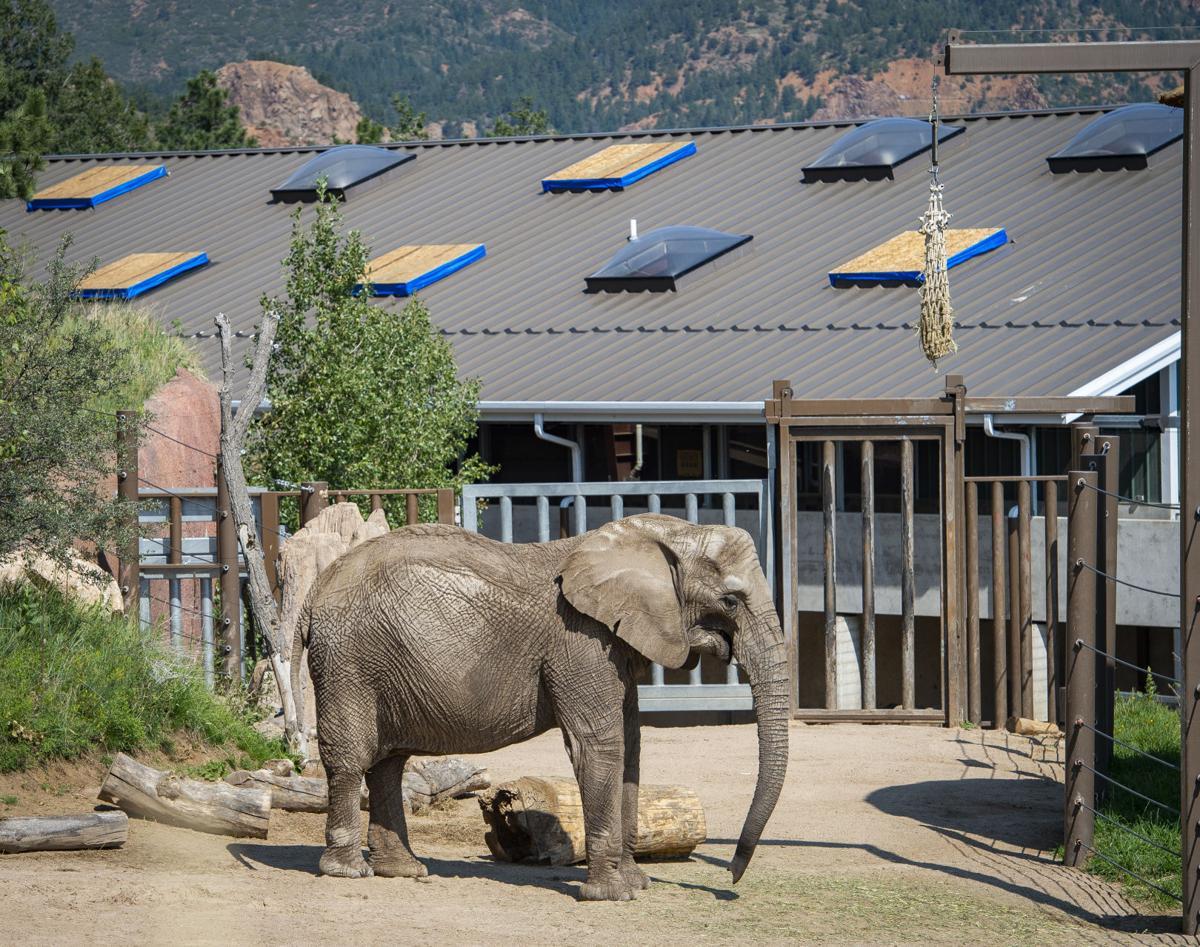 081218-news-zoo 001