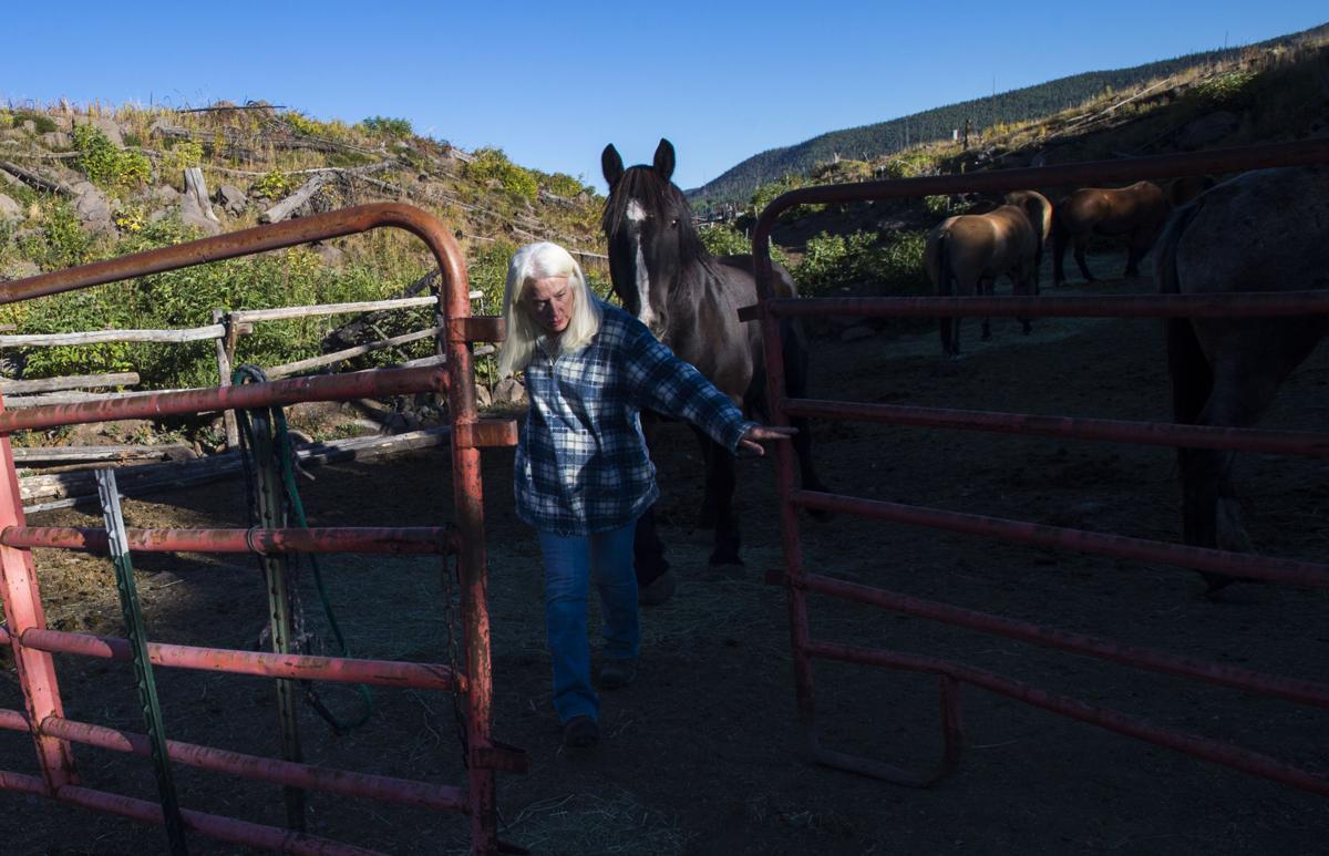Co-owner Holly King feeds the horses at Trappers Lake Lodge in northwest Colorado Thursday morning, Sept. 8, 2016, before guiding a group into the Flat Tops Wilderness Area. (The Gazette, Christian Murdock)