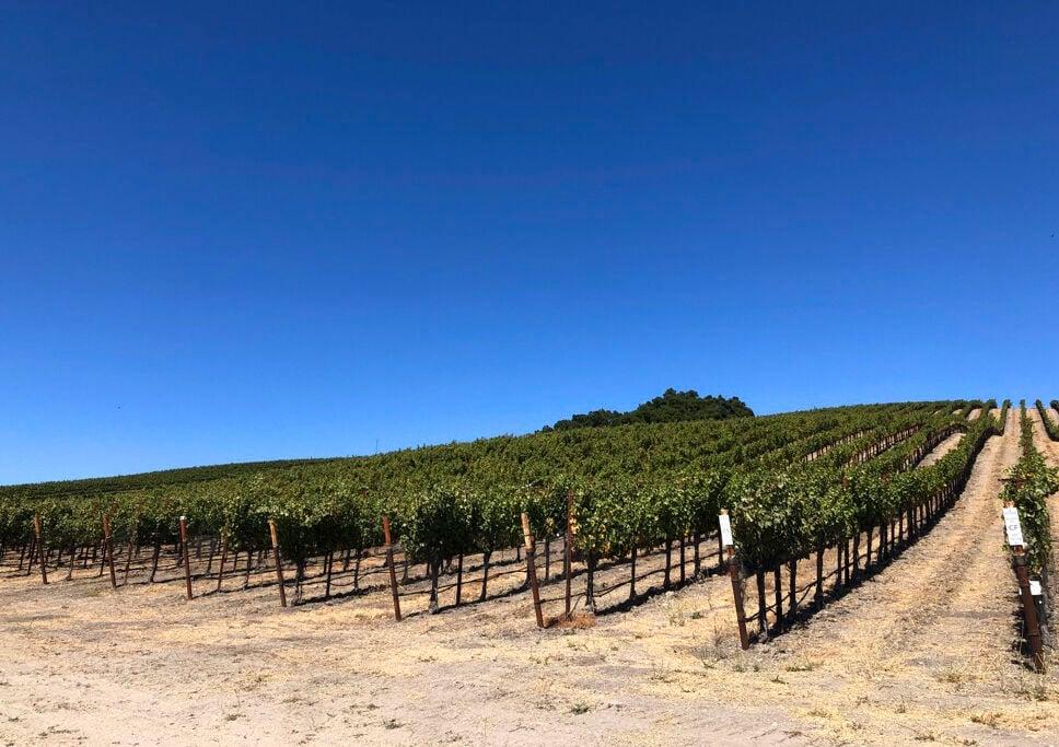 Travel-Paso Robles Wine