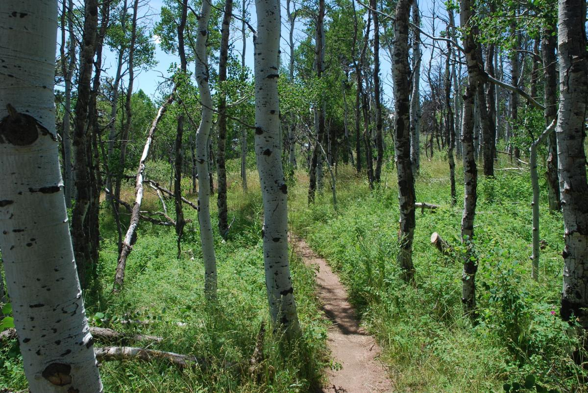 'Epic:' Thrills in store for mountain bikers at Wyoming's Curt Gowdy State Park
