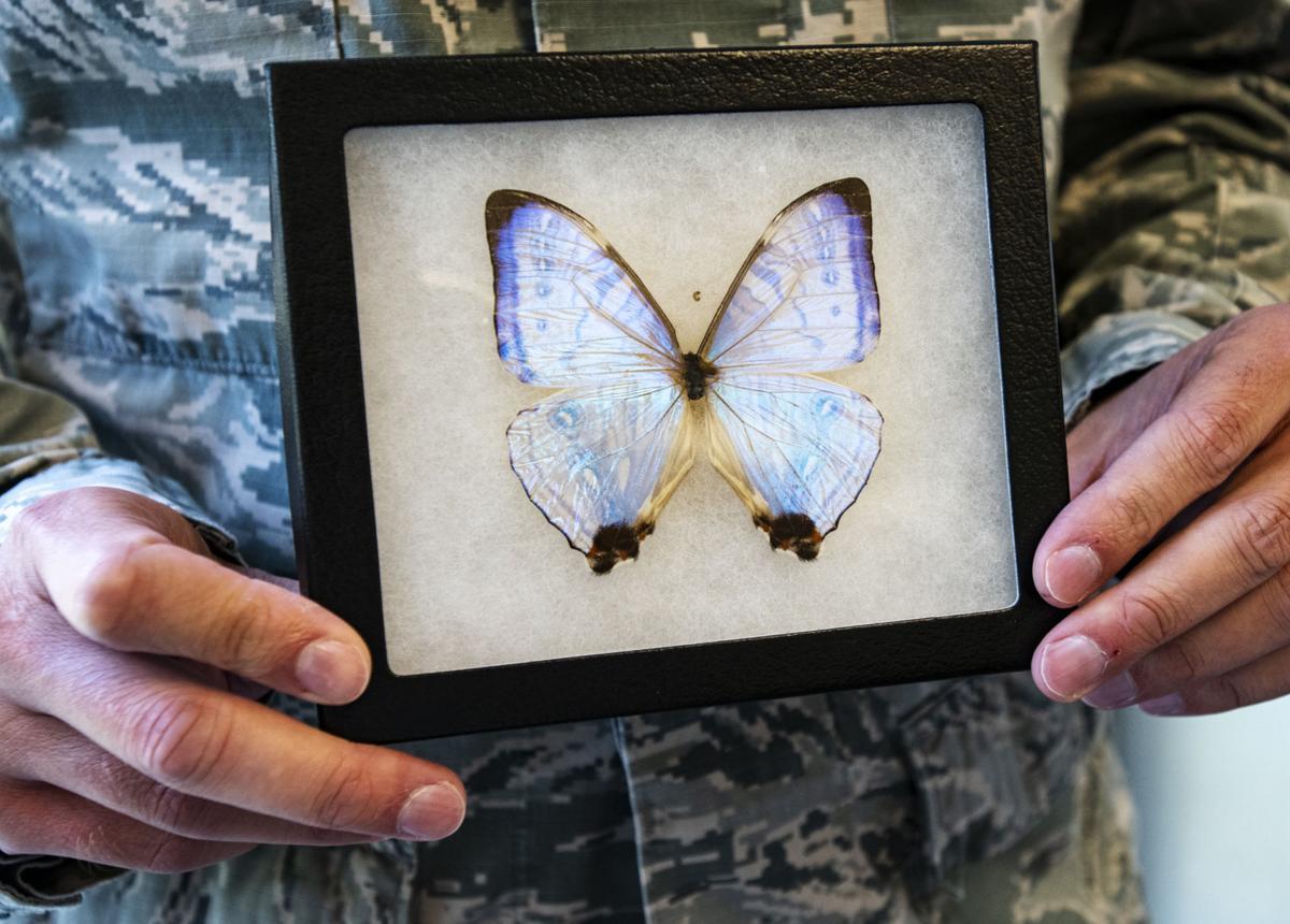 080518-news-butterfly-002.jpg