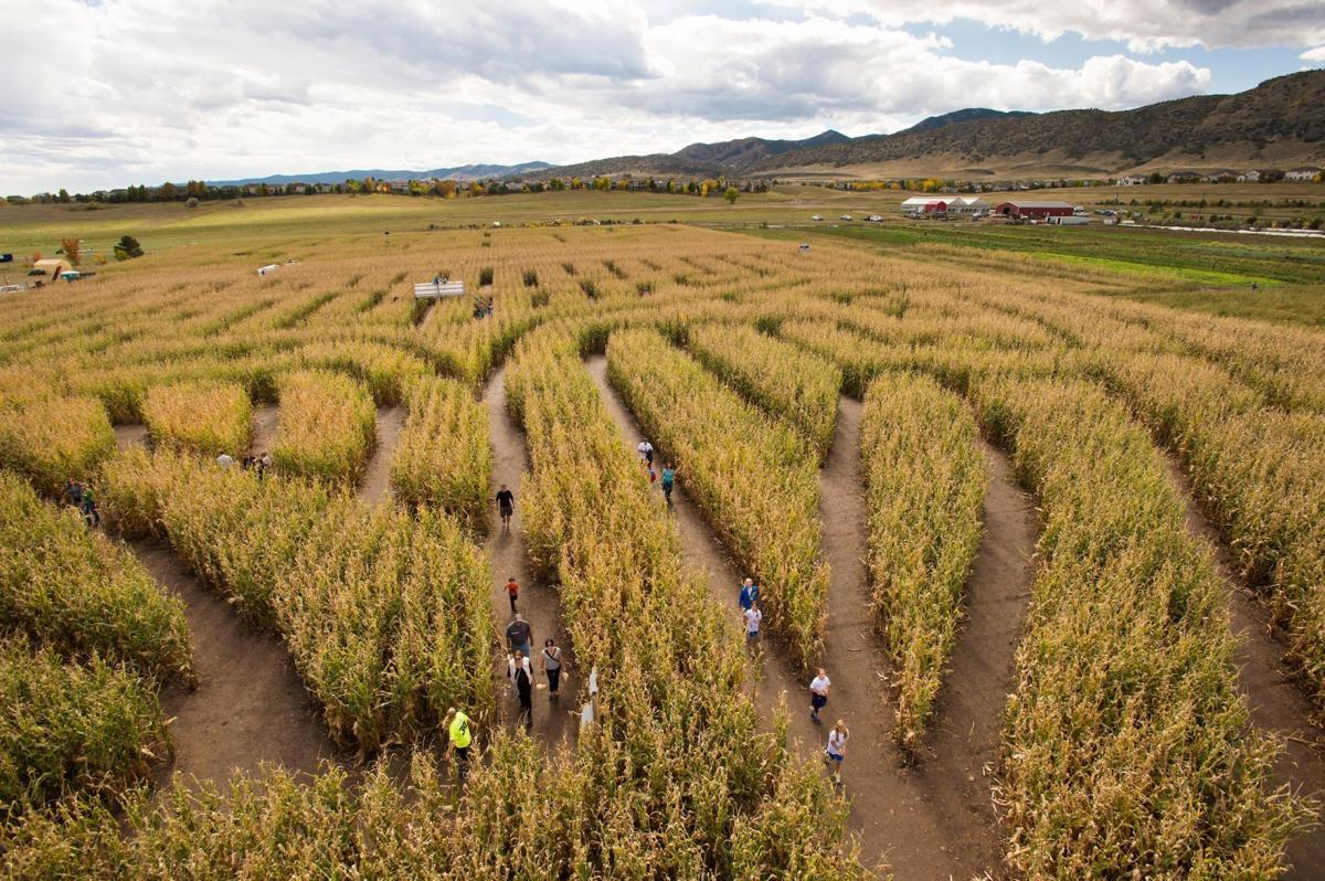 101719 corn maze 2.jpg