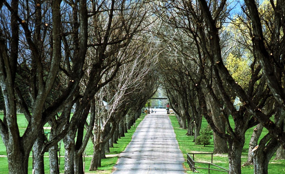 patty jewett trees.jpg