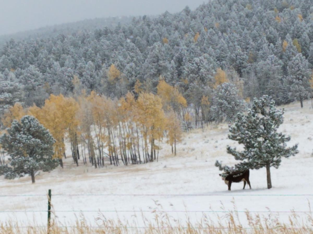 woodland park snow.jpg