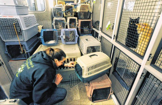 Cat rescuers take more than 150 cats from Springs' home