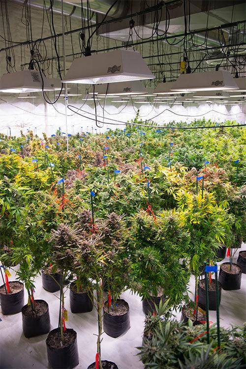 Politics of Pot: medical marijuana