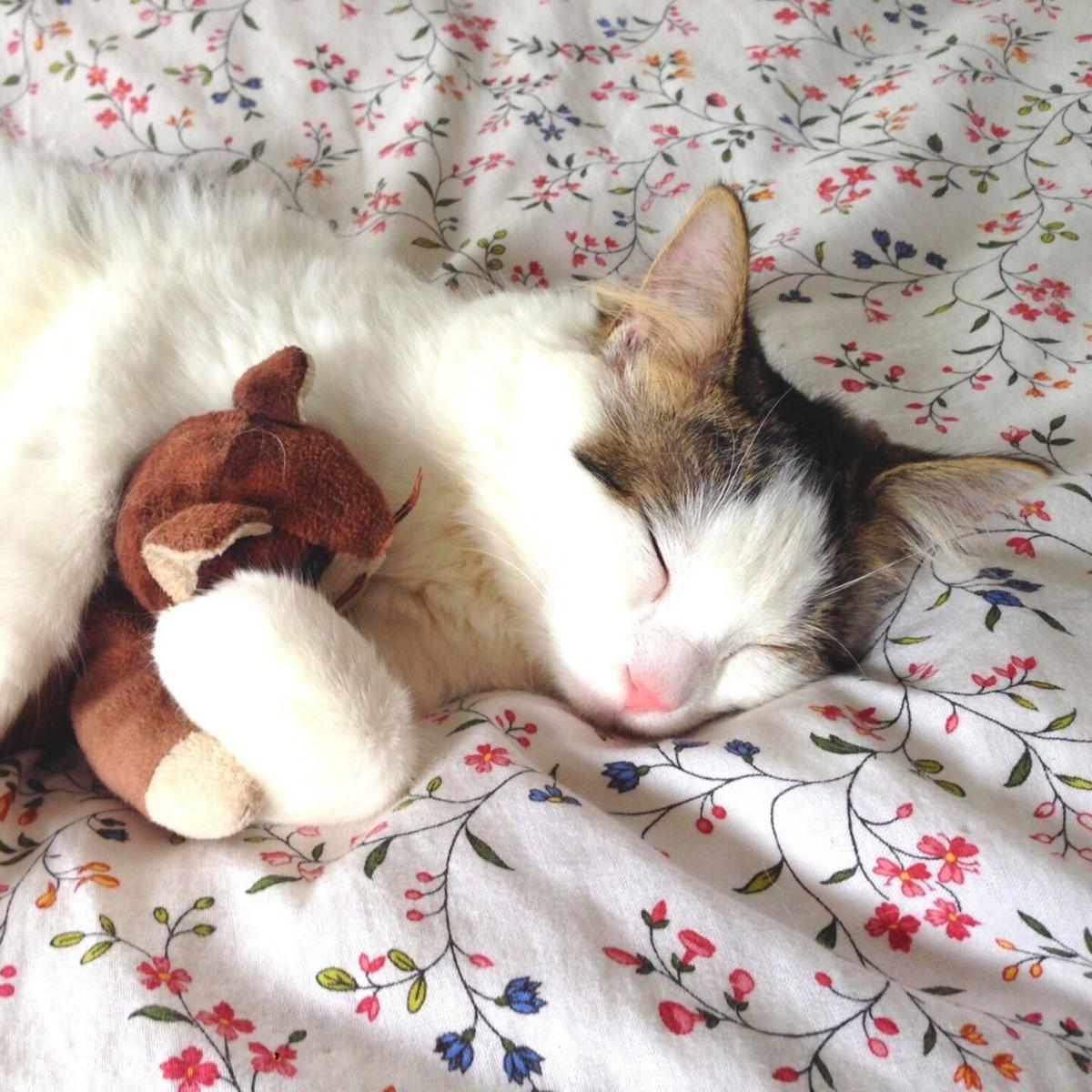 bon pet supply cat toy.jpg