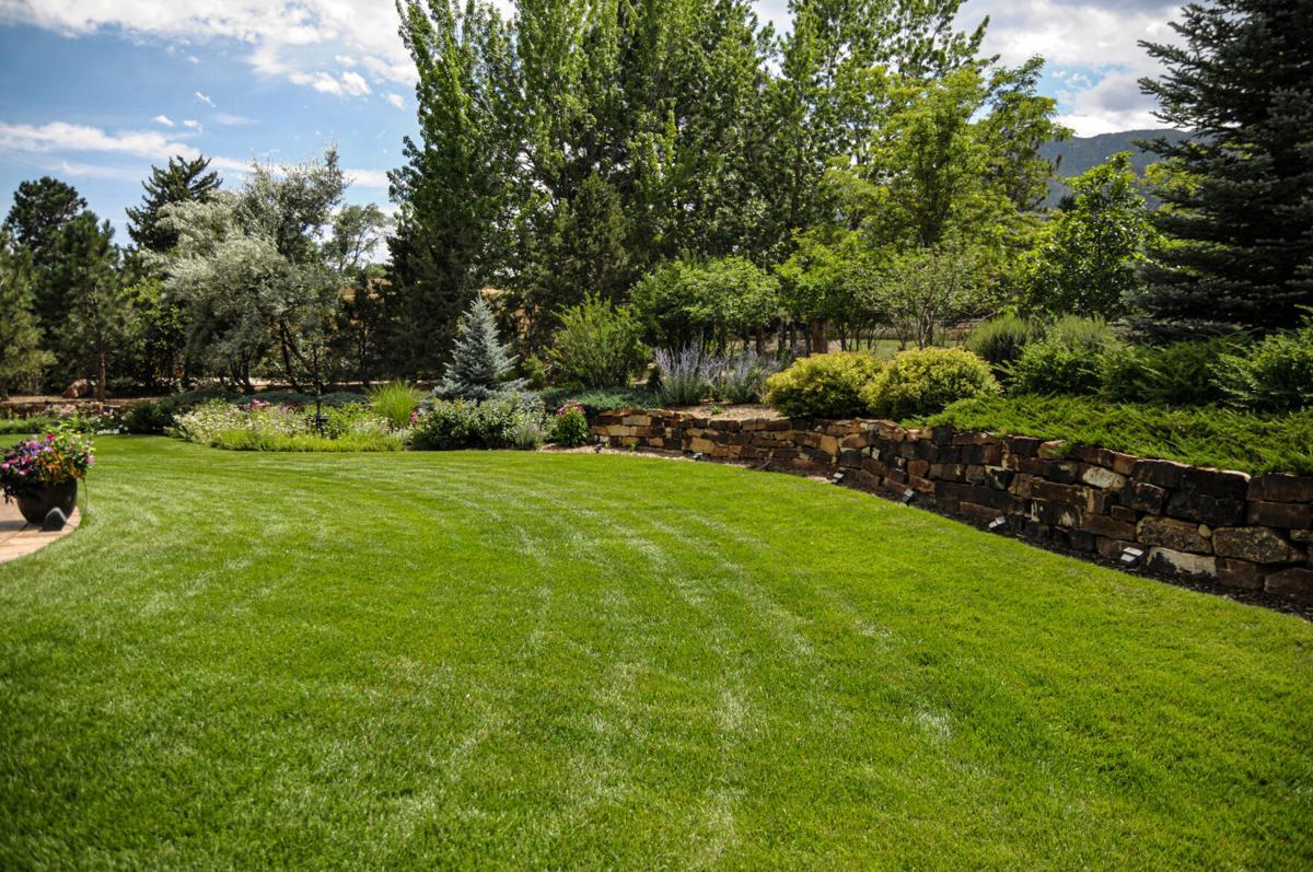 080120 grass 3.jpg