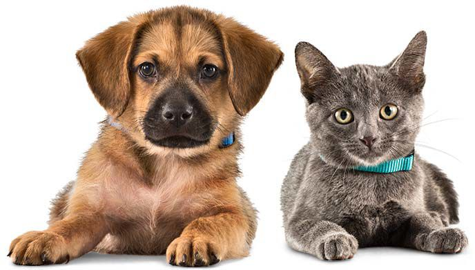 Colorado Springs Area Pet Adoption Fairs And Events Starting March 2