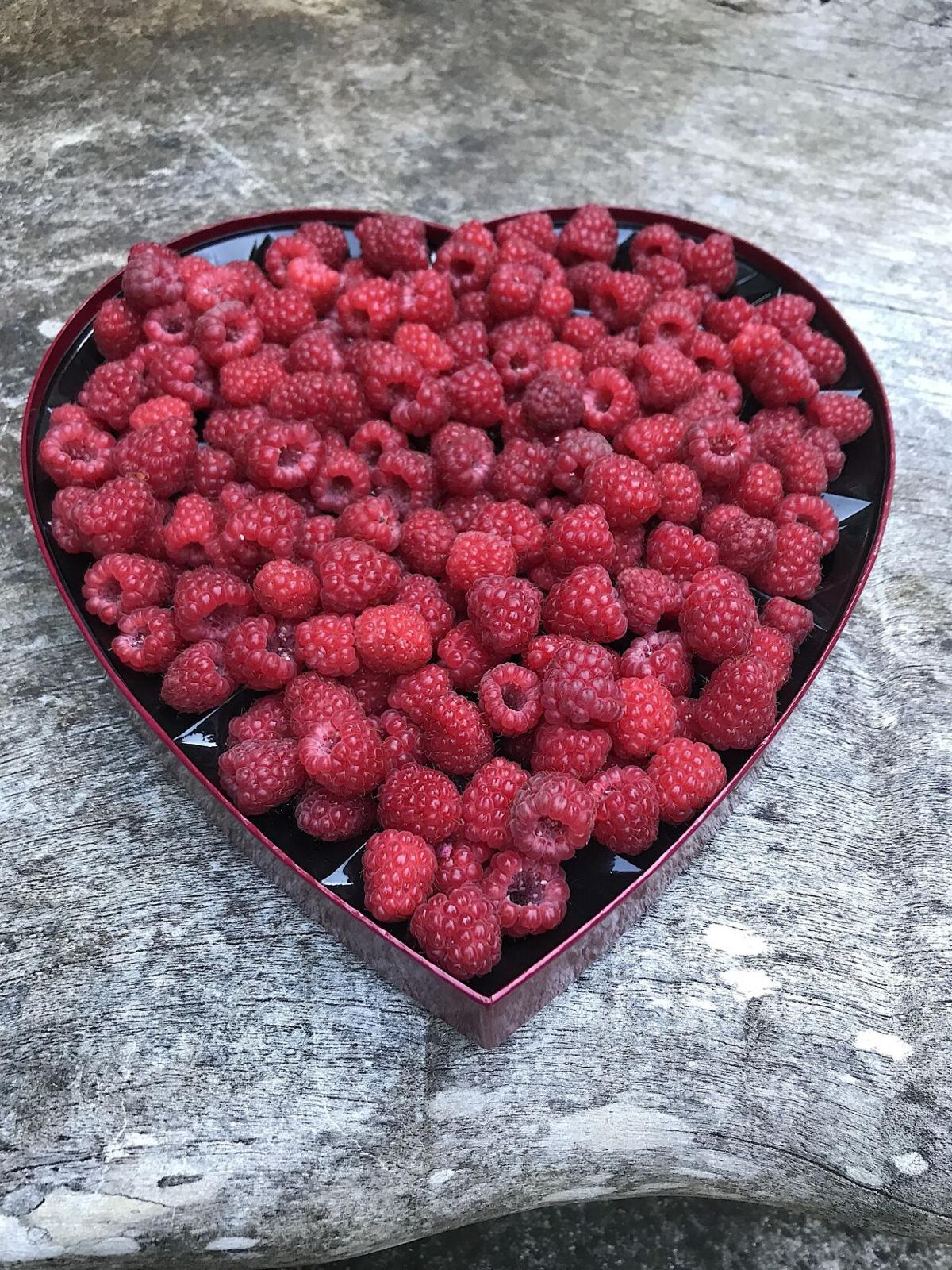 Buy Nothing Fresh-Picked raspberries in repurposed chocolate box.jpg