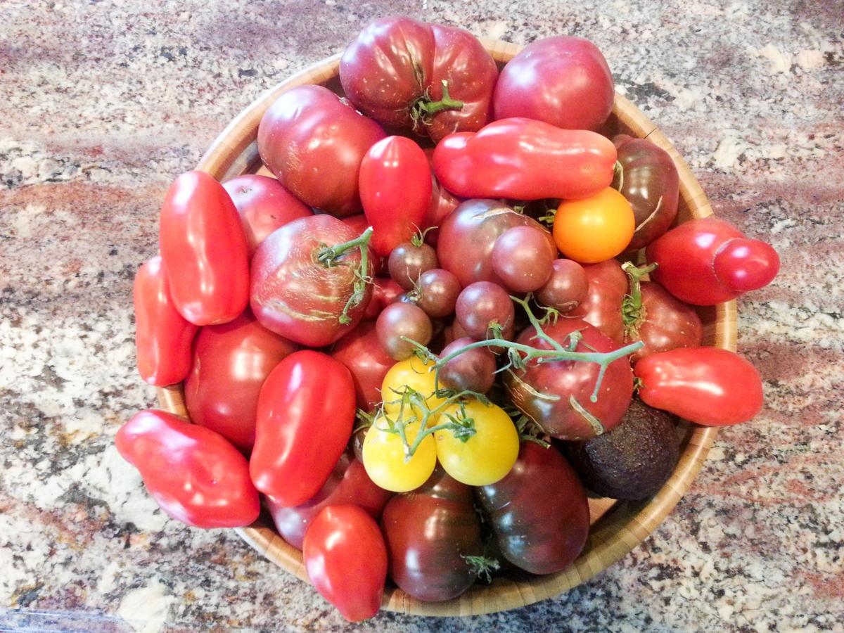 Year-round gardening: Tomatoes - hybrid or heirloom