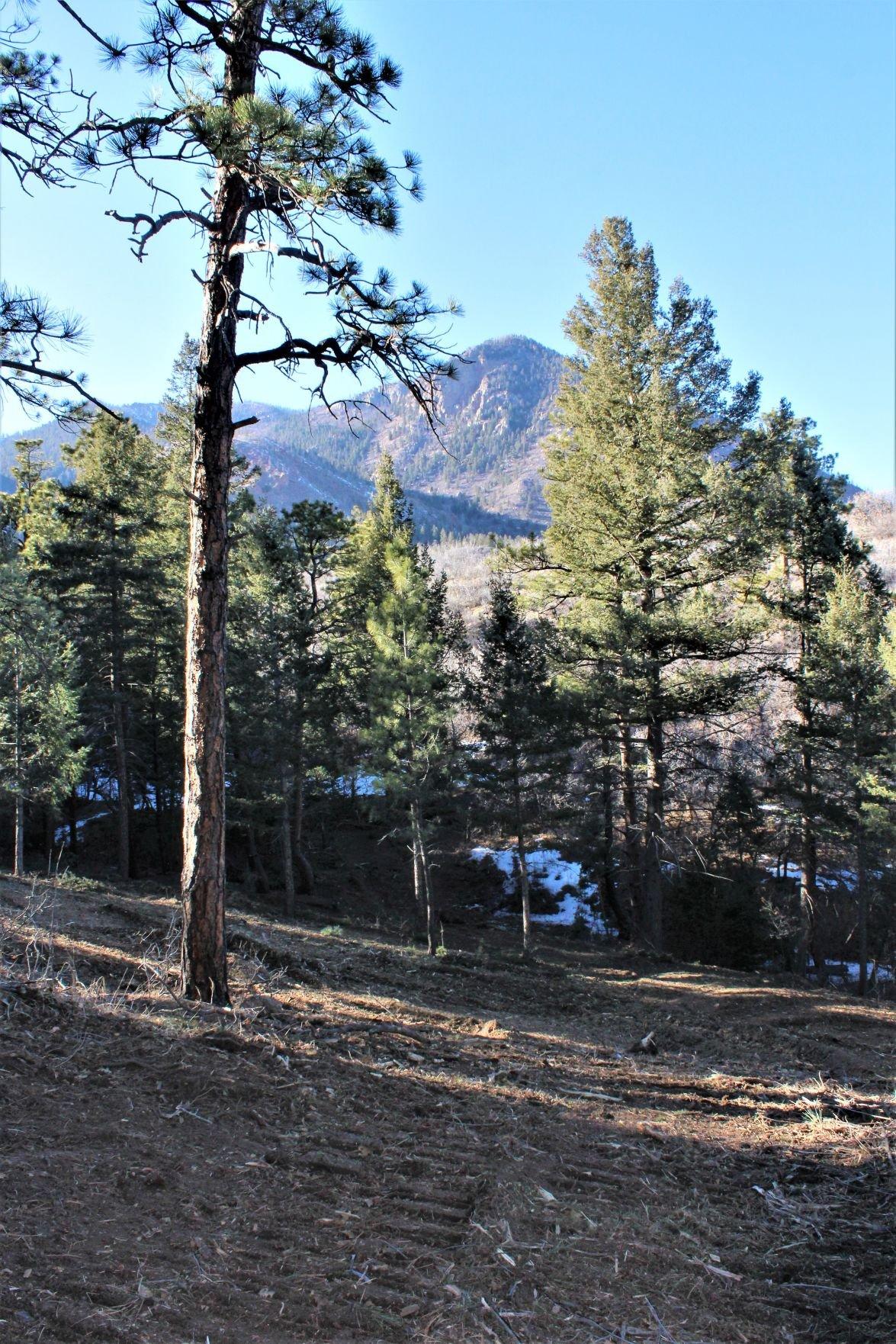 Blodgett Peak reforestation