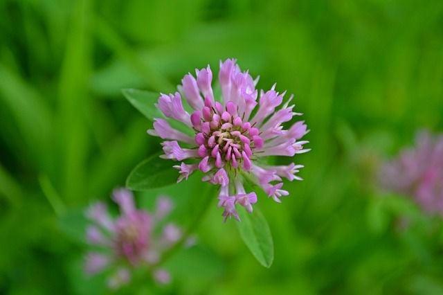 Edible flowers colorado springs news gazette edible flowers mightylinksfo