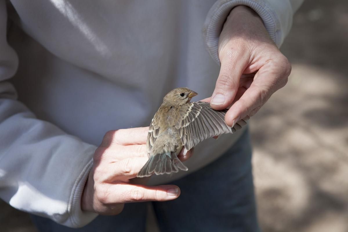 051119 bird 3.jpg