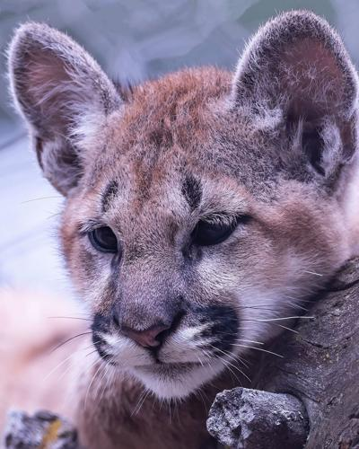 Baby Book: Cheyenne Mountain Zoo's newest residents in front of the camera