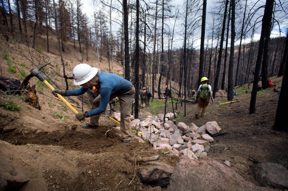 Waldo Canyon burn scar shows signs of life