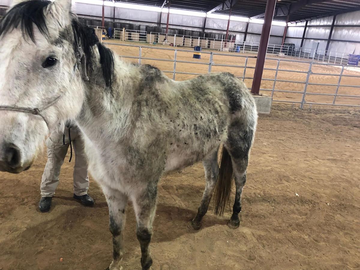Emaciated horses on Slocum Road