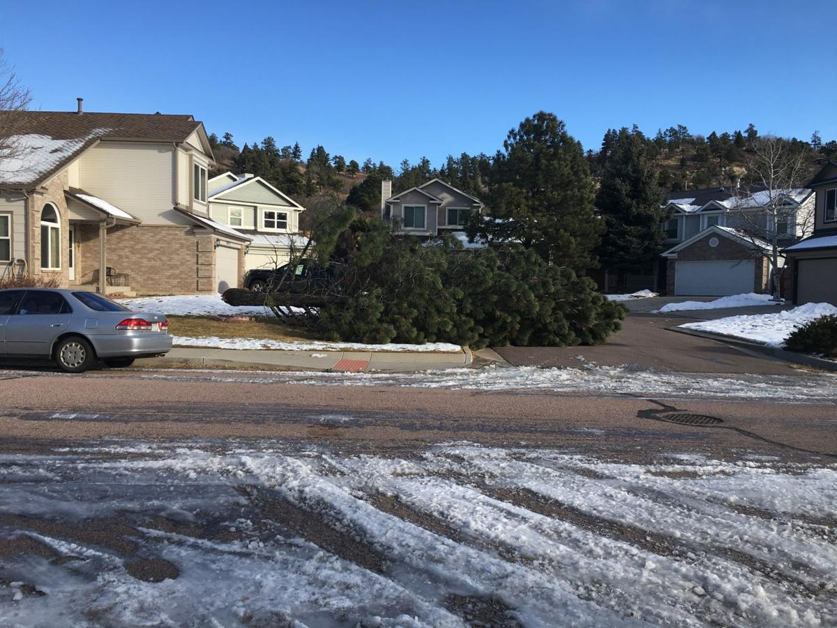 downed tree Colorado Springs.jpg