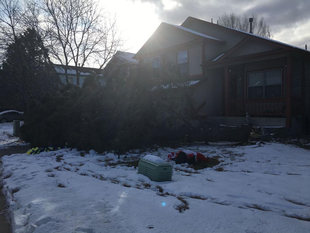 downed tree Colorado Springs.jpg