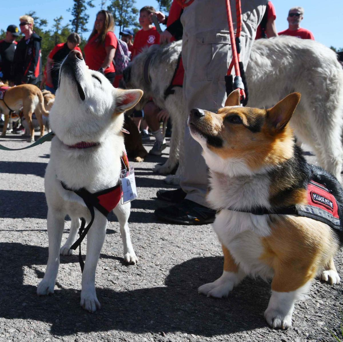 Go Team Therapy dogs train with Black Forest firefighters