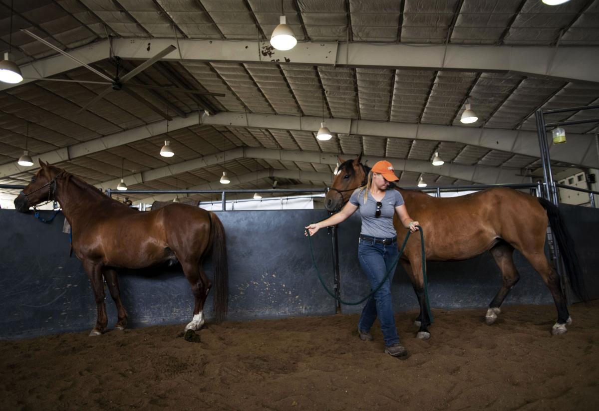 072119-news-horses.jpg