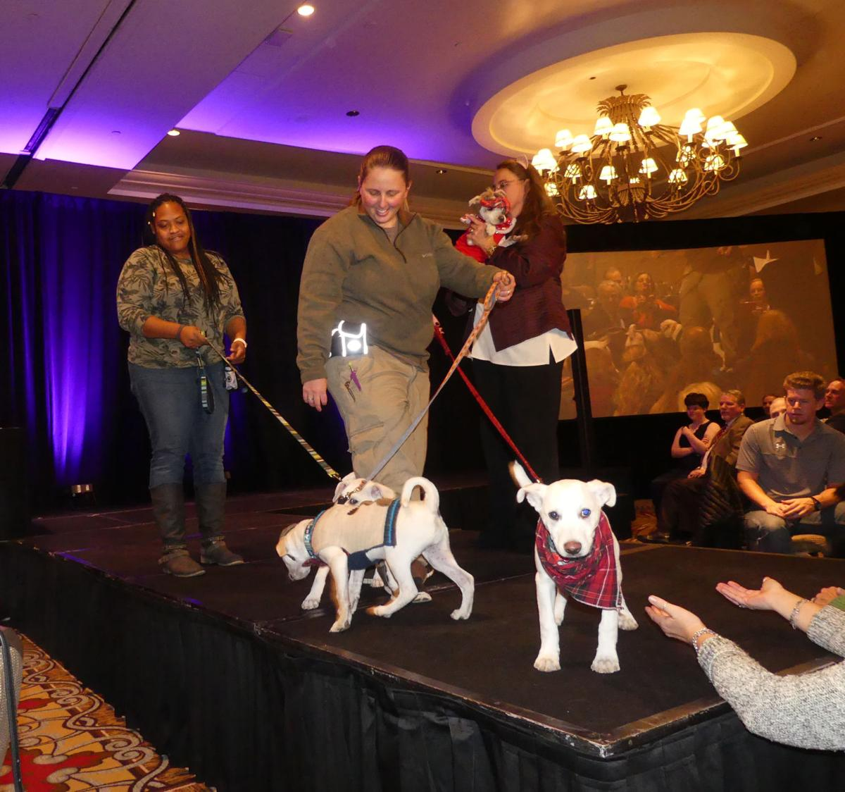 Wags and Wishes celebrates 18 years of assistance to animals in need