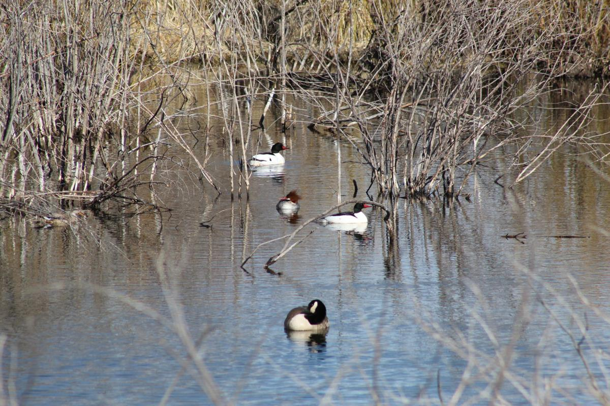 Birds of a feather flock together — in Teller County