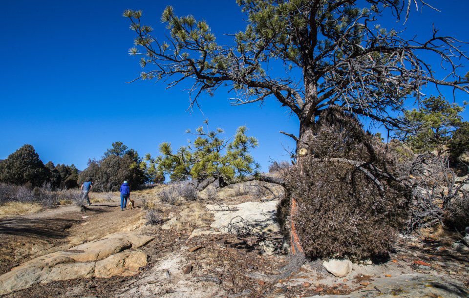 Hikers walk past a juniper tree growing next to a ponderosa pine in Ute Valley Park Friday, Dec. 22, 2017. A recent $1 million grant from the U.S. Department of Homeland Security's Federal Emergency Managament Agency to the Colorado Springs Fire Department will help the city's fire mitigation in the northwest city park as well as an open space adjacent to the Broadmoor Bluffs neighborhood. (The Gazette, Christian Murdock)