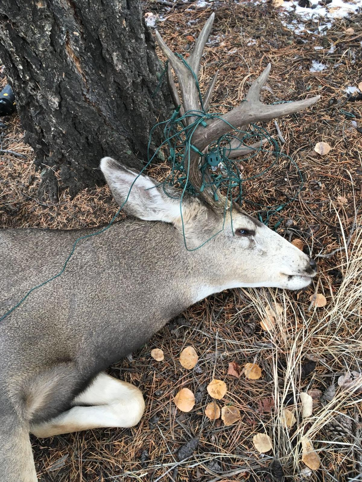 Christmas Decorations Outdoor.Wildlife Officials Warn Residents Outdoor Christmas