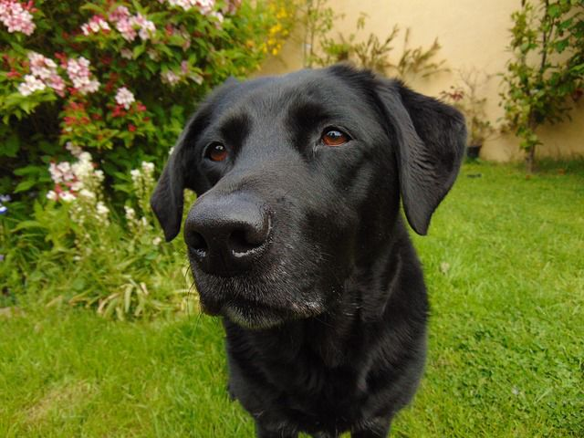 Fish Oil Benefits Dogs and Cats