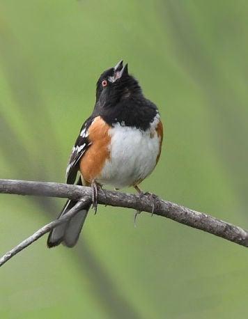 Pikes Peak Birding and Nature Festival